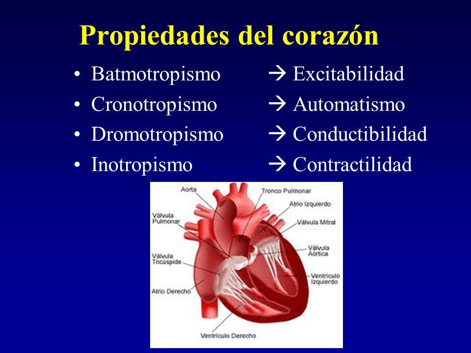 Propiedades del corazón Batmotropismo Excitabilidad Cronotropismo Automatismo Dromotropismo Conductibilidad Inotropismo Contractilidad