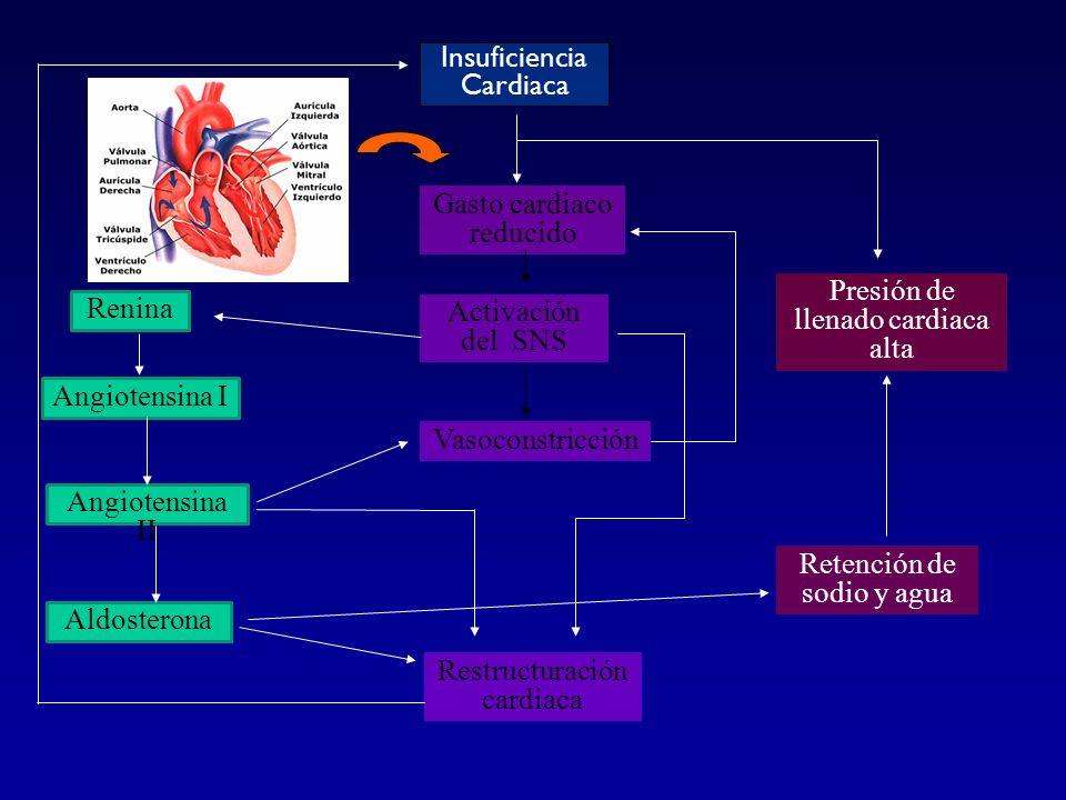Gasto cardiaco reducido Activación del SNS Vasoconstricción Restructuración cardiaca Presión de llenado cardiaca alta Renina Angiotensina I Angiotensi