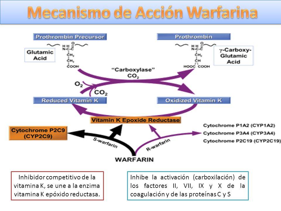 Inhibidor competitivo de la vitamina K, se une a la enzima vitamina K epóxido reductasa. Inhibe la activación (carboxilación) de los factores II, VII,