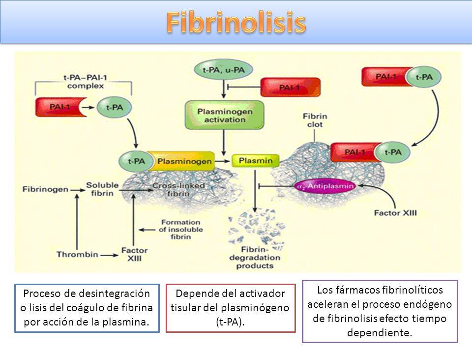 Proceso de desintegración o lisis del coágulo de fibrina por acción de la plasmina. Depende del activador tisular del plasminógeno (t-PA). Los fármaco