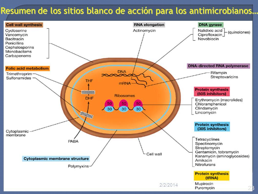 Resumen de los sitios blanco de acción para los antimicrobianos… 2/2/2014 23