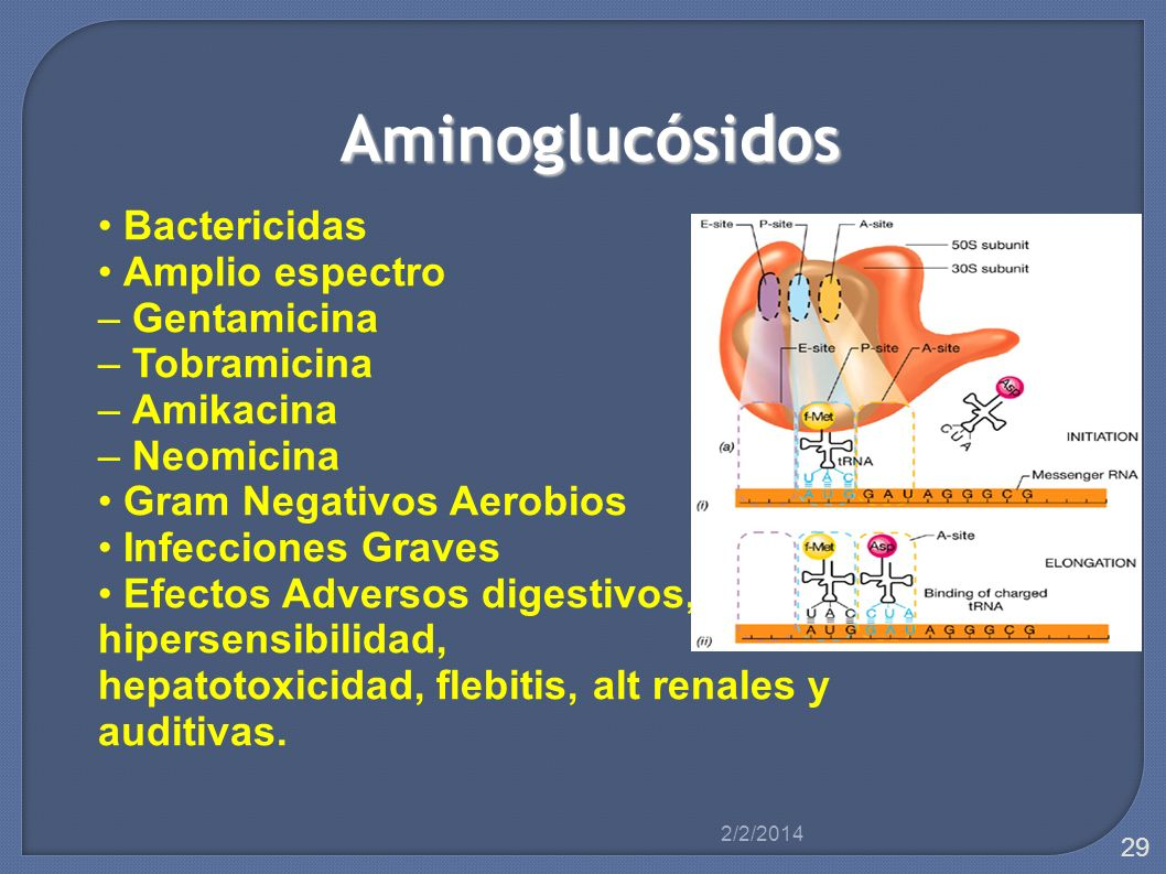 Aminoglucósidos Bactericidas Amplio espectro – Gentamicina – Tobramicina – Amikacina – Neomicina Gram Negativos Aerobios Infecciones Graves Efectos Ad
