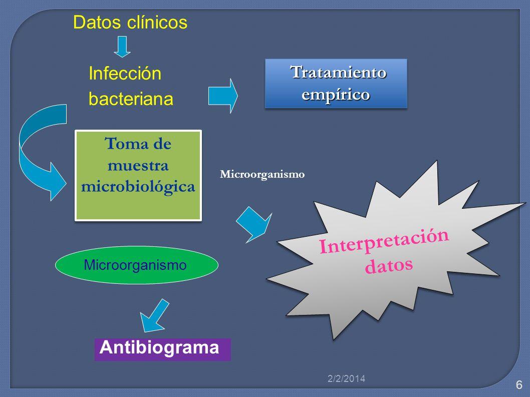 Microorganismo Datos clínicos Infección bacteriana Tratamiento empírico Tratamiento empírico Toma de muestra microbiológica Interpretación datos Inter