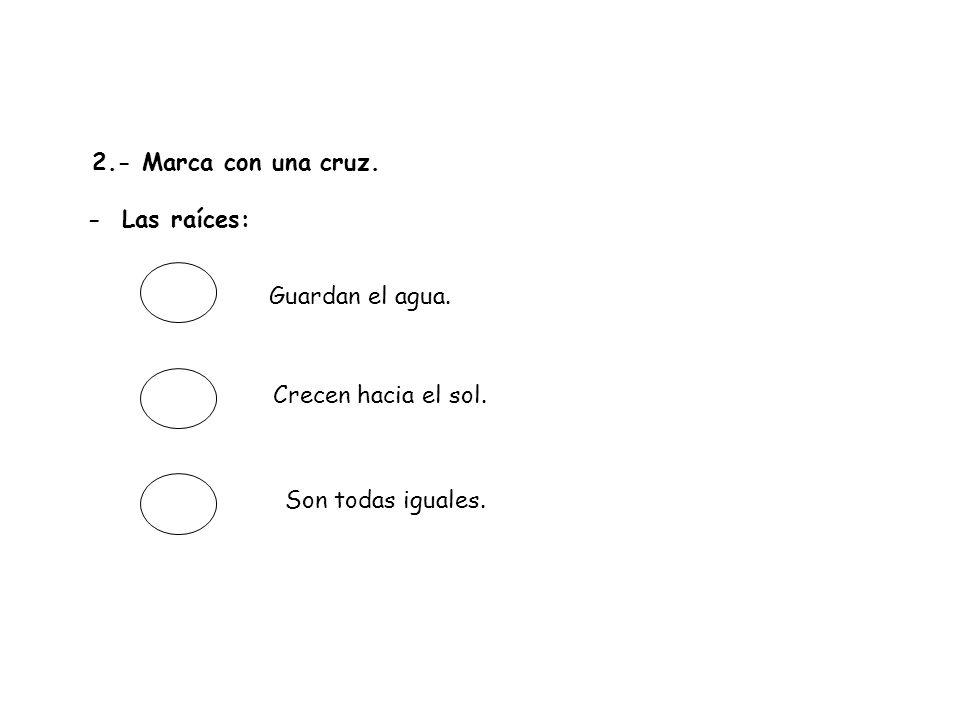 3.- ¿Cuáles de las siguientes preguntas tienen respuesta en el texto.