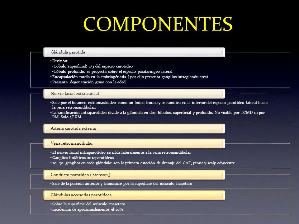 COMPONENTES División: Lóbulo superficial: 2/3 del espacio carotídeo Lóbulo profundo: se proyecta sobre el espacio parafaringeo lateral Encapsulación t