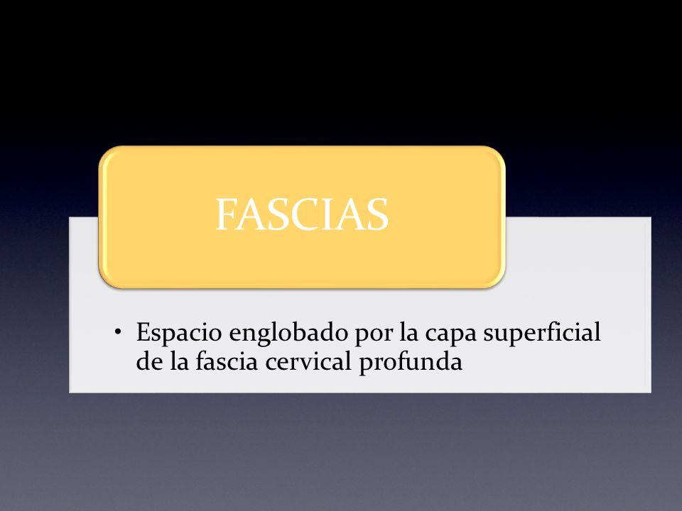 Espacio englobado por la capa superficial de la fascia cervical profunda FASCIAS