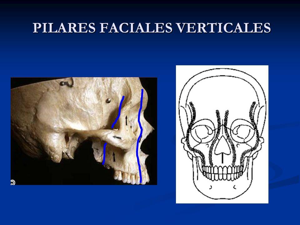 PILARES FACIALES VERTICALES PILARES FACIALES VERTICALES VERTICAL BUTTRESSES: VERTICAL BUTTRESSES: 1. LATERAL MAXILLARY 2. MEDIAL MAXILLARY 1 2