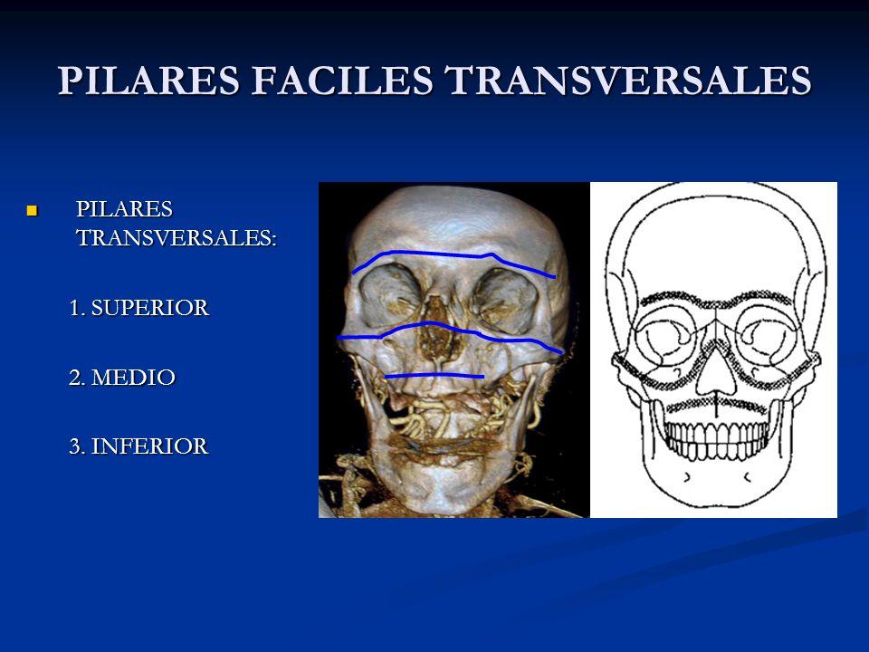 PILARES FACILES TRANSVERSALES PILARES TRANSVERSALES: PILARES TRANSVERSALES: 1. SUPERIOR 2. MEDIO 3. INFERIOR 1 2 3