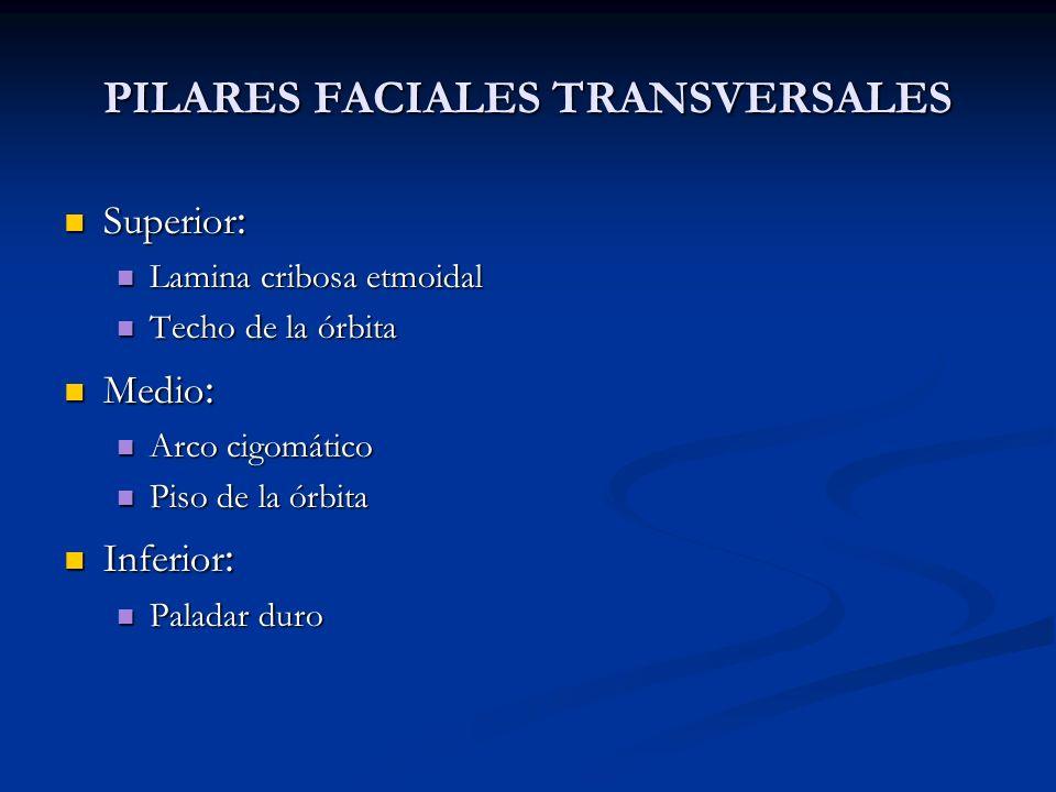 PILARES FACIALES TRANSVERSALES Superior : Superior : Lamina cribosa etmoidal Lamina cribosa etmoidal Techo de la órbita Techo de la órbita Medio : Med