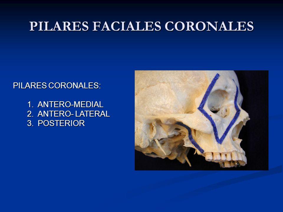 PILARES FACIALES CORONALES PILARES CORONALES: 1.ANTERO-MEDIAL 2.ANTERO- LATERAL 3.POSTERIOR