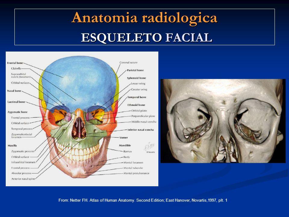 Anatomia radiologica ESQUELETO FACIAL From: Netter FH. Atlas of Human Anatomy. Second Edition; East Hanover, Novartis,1997, plt. 1