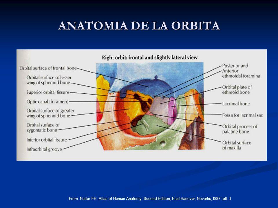 ANATOMIA DE LA ORBITA From: Netter FH. Atlas of Human Anatomy. Second Edition; East Hanover, Novartis,1997, plt. 1