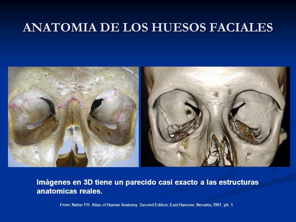 ANATOMIA DE LOS HUESOS FACIALES From: Netter FH. Atlas of Human Anatomy. Second Edition; East Hanover, Novartis,1997, plt. 1 Imágenes en 3D tiene un p
