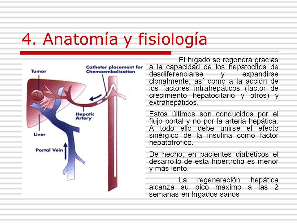 4. Anatomía y fisiología El hígado se regenera gracias a la capacidad de los hepatocitos de desdiferenciarse y expandirse clonalmente, así como a la a