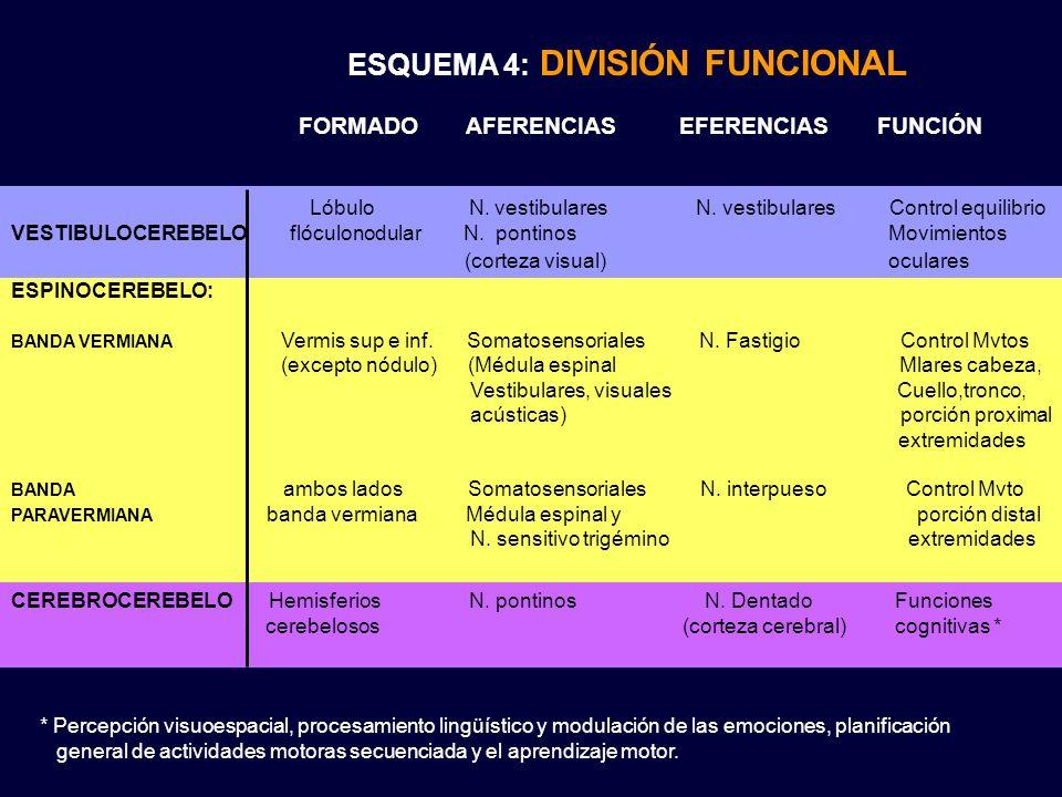 ESQUEMA 4: DIVISIÓN FUNCIONAL ESPINOCEREBELO: BANDA VERMIANA Vermis sup e inf. Somatosensoriales N. Fastigio Control Mvtos (excepto nódulo) (Médula es