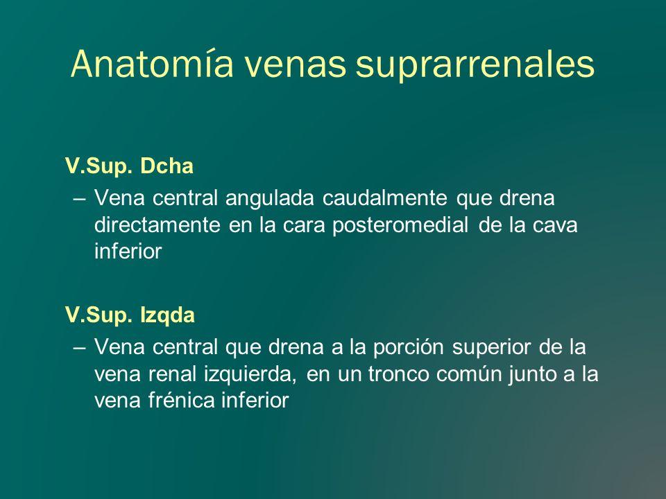 Anatomía venas suprarrenales V.Sup. Dcha –Vena central angulada caudalmente que drena directamente en la cara posteromedial de la cava inferior V.Sup.