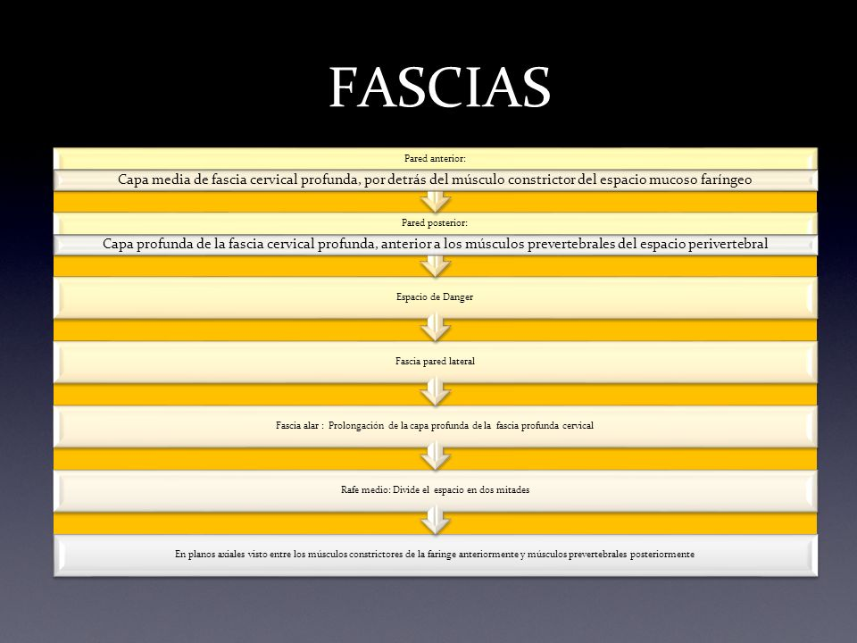 En planos axiales visto entre los músculos constrictores de la faringe anteriormente y músculos prevertebrales posteriormente Rafe medio: Divide el es