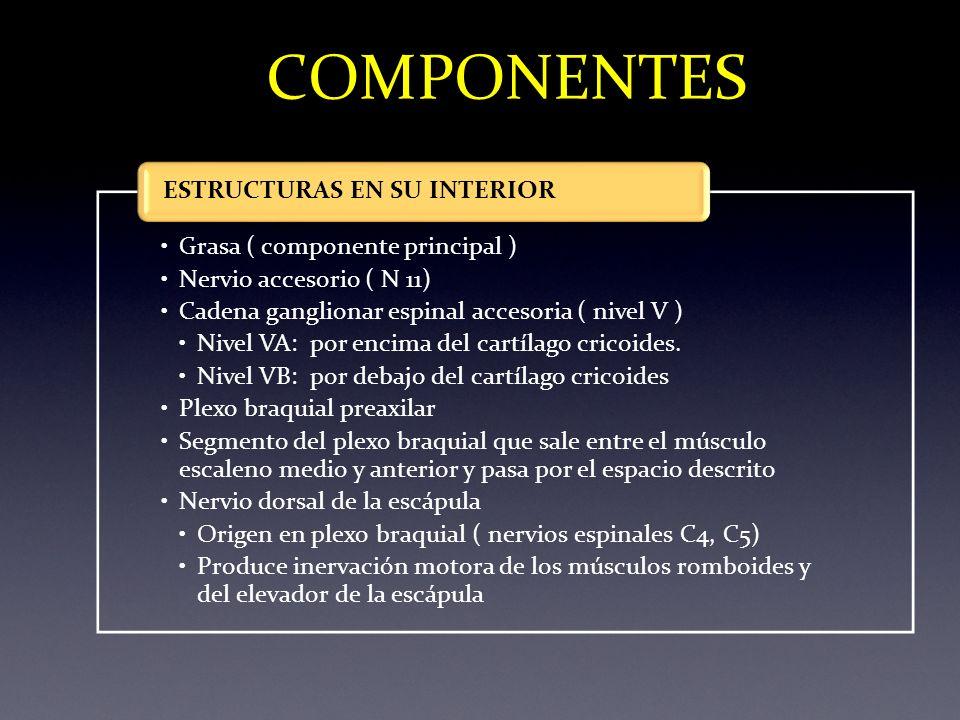 COMPONENTES Grasa ( componente principal ) Nervio accesorio ( N 11) Cadena ganglionar espinal accesoria ( nivel V ) Nivel VA: por encima del cartílago
