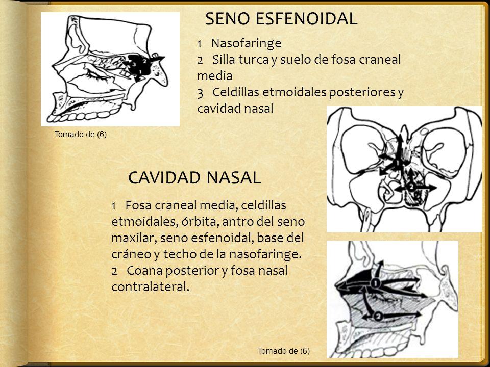 SENO ESFENOIDAL 1 Nasofaringe 2 Silla turca y suelo de fosa craneal media 3 Celdillas etmoidales posteriores y cavidad nasal CAVIDAD NASAL 1 Fosa cran