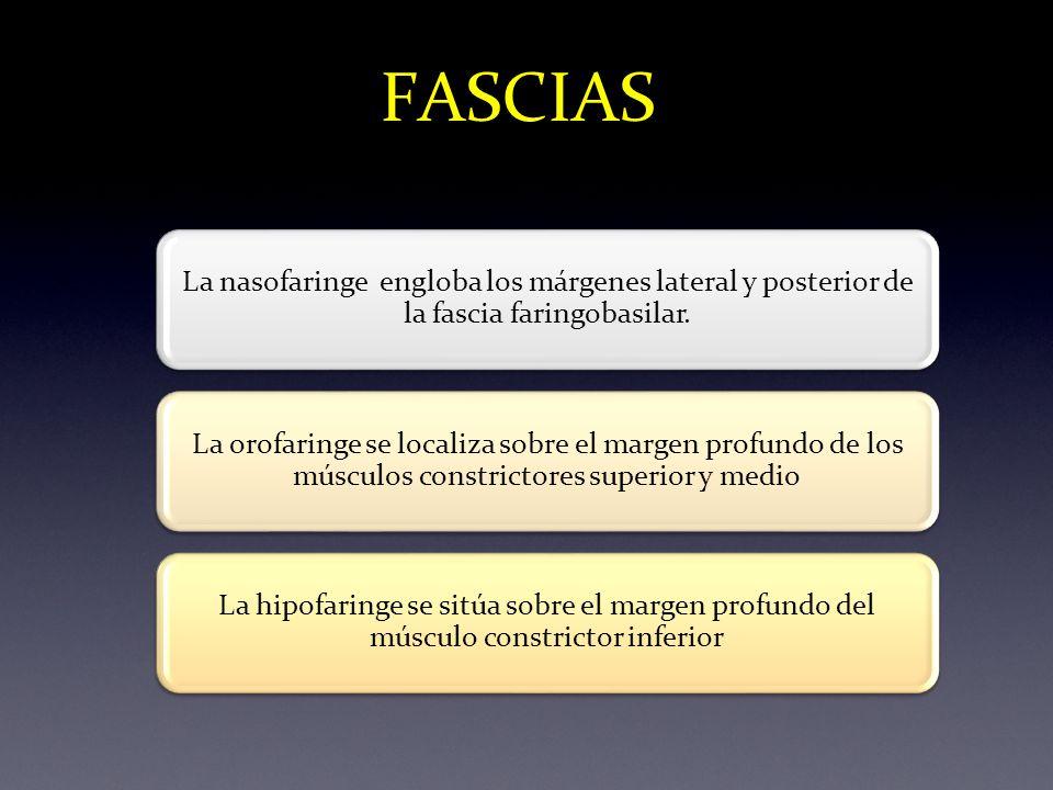 FASCIAS La nasofaringe engloba los márgenes lateral y posterior de la fascia faringobasilar. La orofaringe se localiza sobre el margen profundo de los