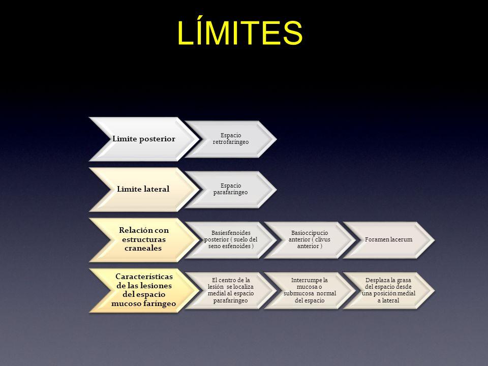 LÍMITES Limite posterior Espacio retrofaríngeo Limite lateral Espacio parafaríngeo Relación con estructuras craneales Basiesfenoides posterior ( suelo
