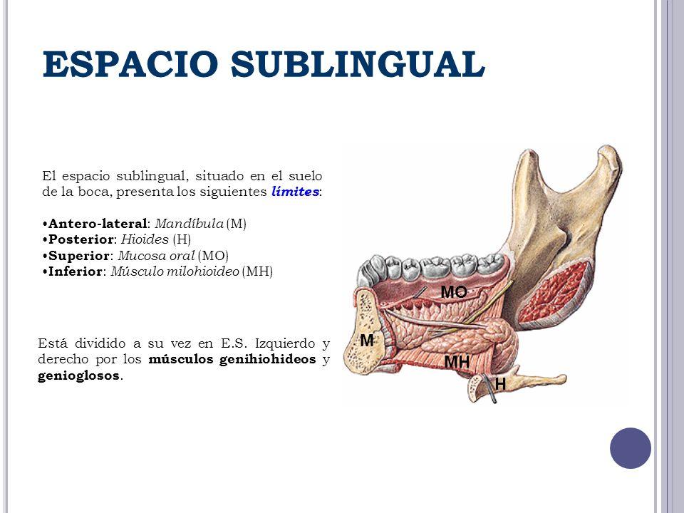 El espacio sublingual, situado en el suelo de la boca, presenta los siguientes límites : Antero-lateral : Mandíbula (M) Posterior : Hioides (H) Superi