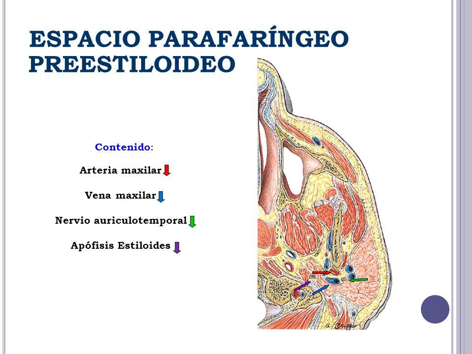 Contenido : Arteria maxilar Vena maxilar Nervio auriculotemporal Apófisis Estiloides PREESTILOIDEO ESPACIO PARAFARÍNGEO
