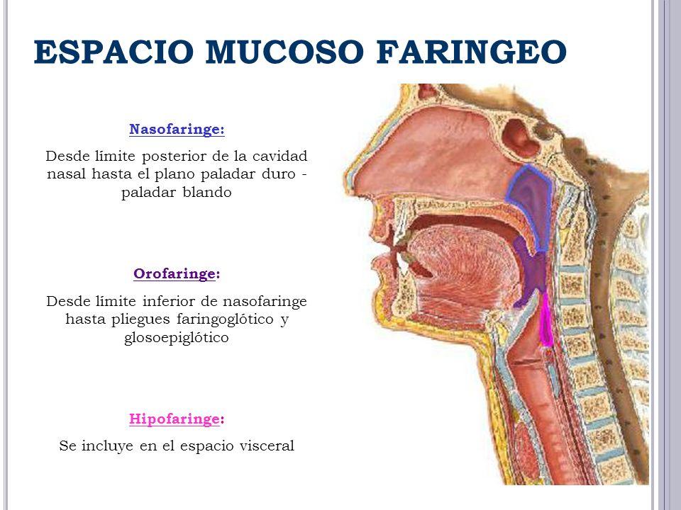 Nasofaringe: Desde límite posterior de la cavidad nasal hasta el plano paladar duro - paladar blando Orofaringe: Desde límite inferior de nasofaringe