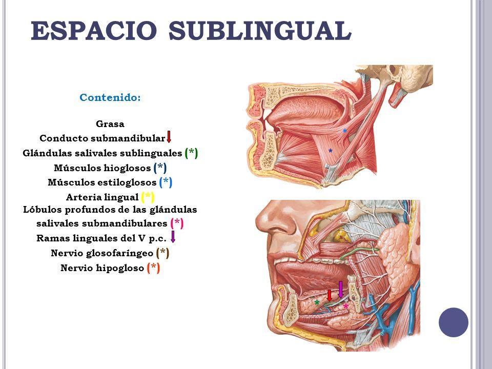 ESPACIO SUBLINGUAL Contenido: Grasa Conducto submandibular (*) Glándulas salivales sublinguales (*) Músculos hioglosos (*) Músculos estiloglosos (*) A
