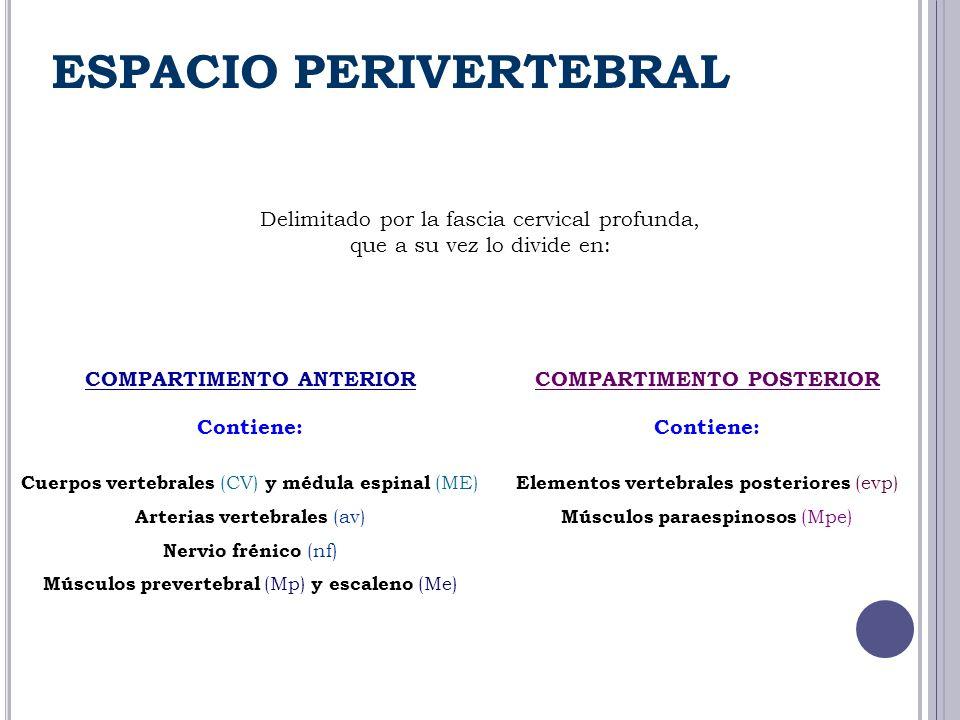 Delimitado por la fascia cervical profunda, que a su vez lo divide en: COMPARTIMENTO ANTERIOR Contiene: Cuerpos vertebrales (CV) y médula espinal (ME)