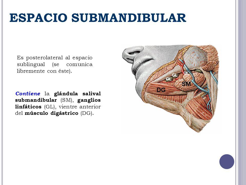 Es posterolateral al espacio sublingual (se comunica libremente con éste). ESPACIO SUBMANDIBULAR SM GL DG Contiene la glándula salival submandibular (