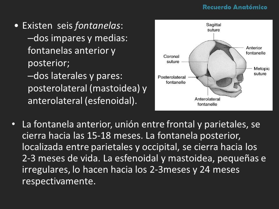 La fontanela anterior, unión entre frontal y parietales, se cierra hacia las 15-18 meses. La fontanela posterior, localizada entre parietales y occipi