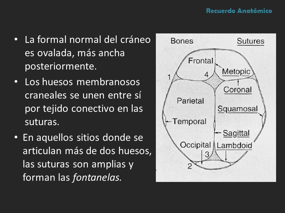La formal normal del cráneo es ovalada, más ancha posteriormente. Los huesos membranosos craneales se unen entre sí por tejido conectivo en las sutura