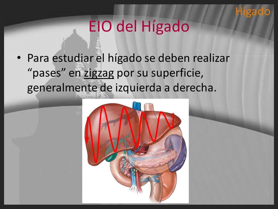 EIO del Hígado Para estudiar el hígado se deben realizar pases en zigzag por su superficie, generalmente de izquierda a derecha. Hígado