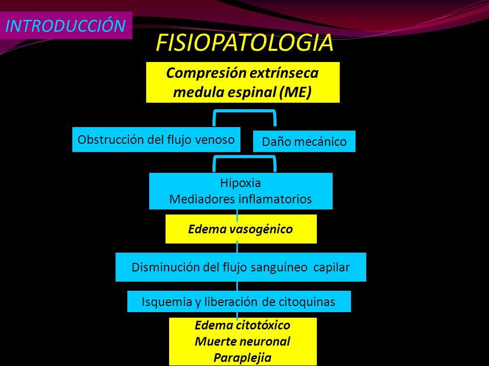 FISIOPATOLOGIA Compresión extrínseca medula espinal (ME) Obstrucción del flujo venoso Daño mecánico Hipoxia Mediadores inflamatorios Edema vasogénico
