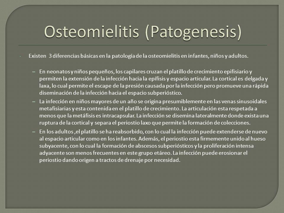 Existen 3 diferencias básicas en la patología de la osteomielitis en infantes, niños y adultos. – En neonatos y niños pequeños, los capilares cruzan e