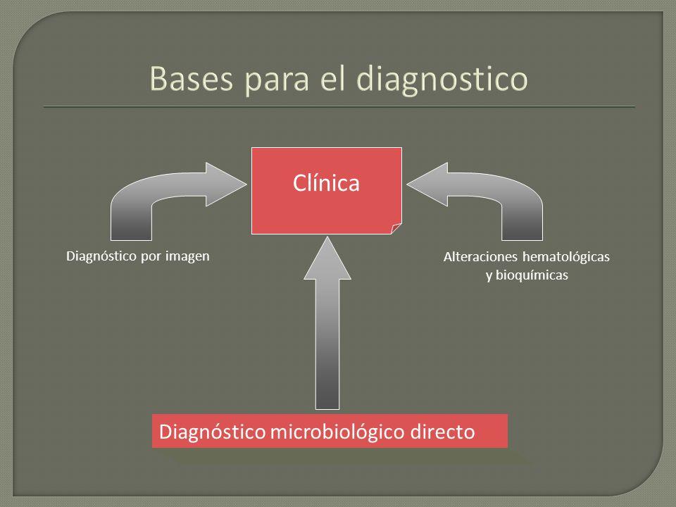 Bases para el diagnostico Clínica Diagnóstico por imagen Alteraciones hematológicas y bioquímicas Diagnóstico microbiológico directo