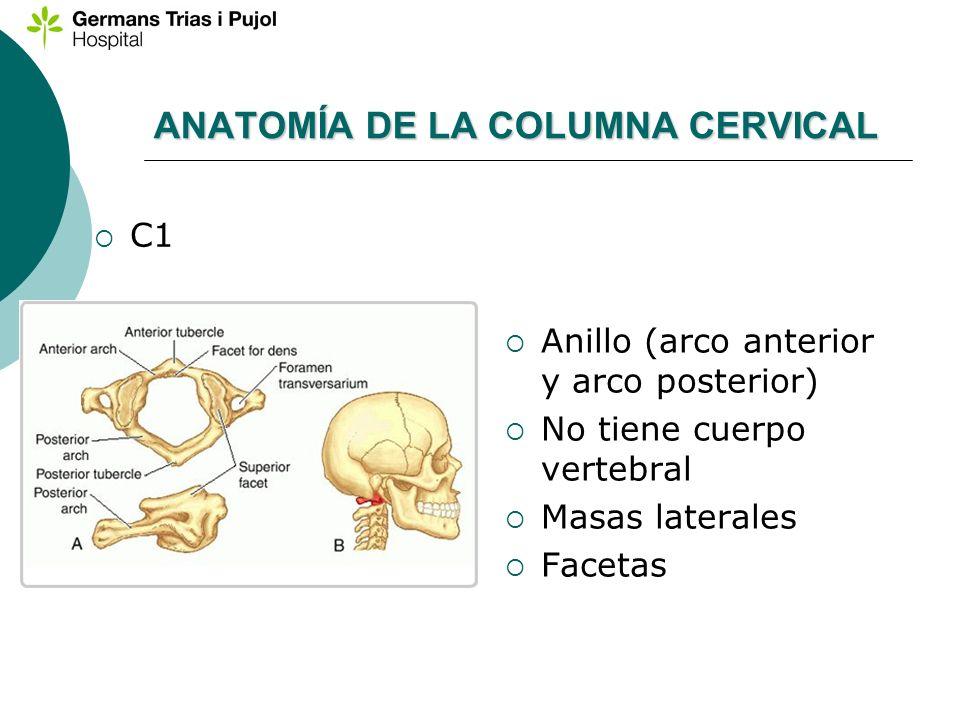 ANATOMÍA DE LA COLUMNA CERVICAL C1 Anillo (arco anterior y arco posterior) No tiene cuerpo vertebral Masas laterales Facetas