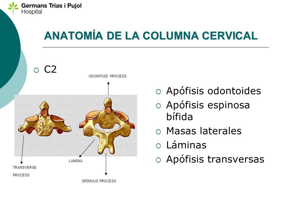 ANATOMÍA DE LA COLUMNA CERVICAL C2 Apófisis odontoides Apófisis espinosa bífida Masas laterales Láminas Apófisis transversas ODONTOID PROCESS SPINOUS