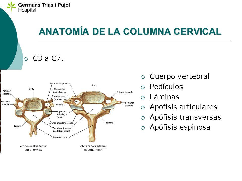 ANATOMÍA DE LA COLUMNA CERVICAL C3 a C7. Cuerpo vertebral Pedículos Láminas Apófisis articulares Apófisis transversas Apófisis espinosa