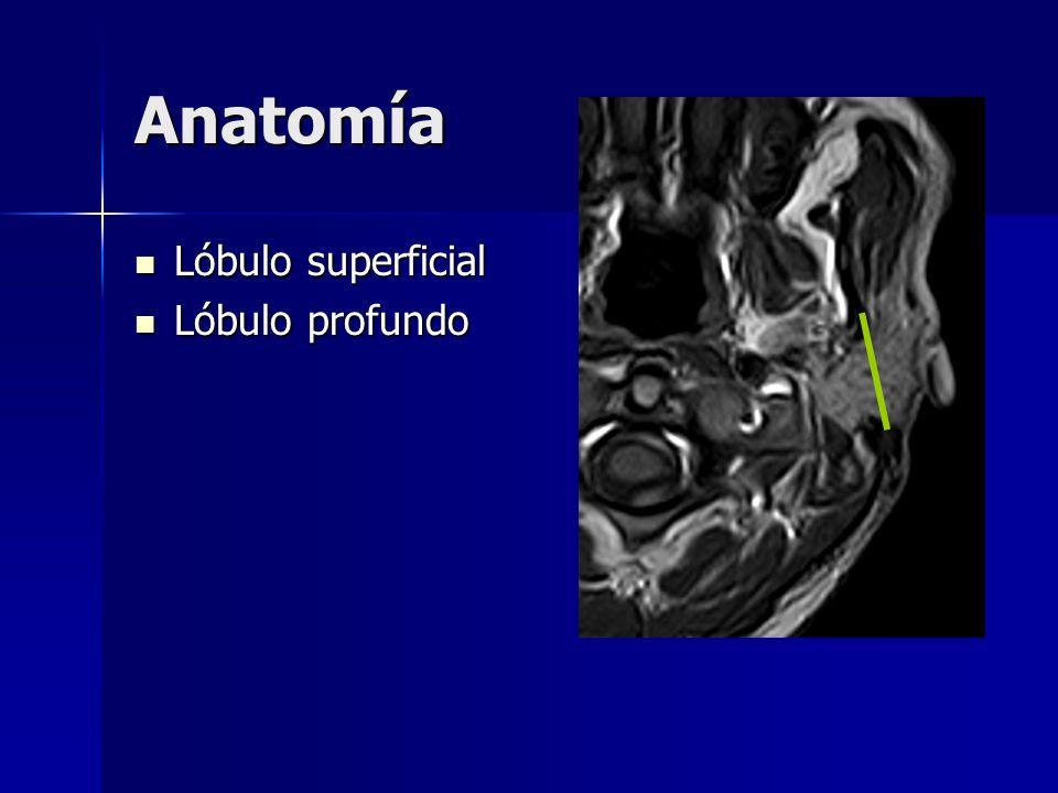 Anatomía Lóbulo superficial Lóbulo superficial Lóbulo profundo Lóbulo profundo