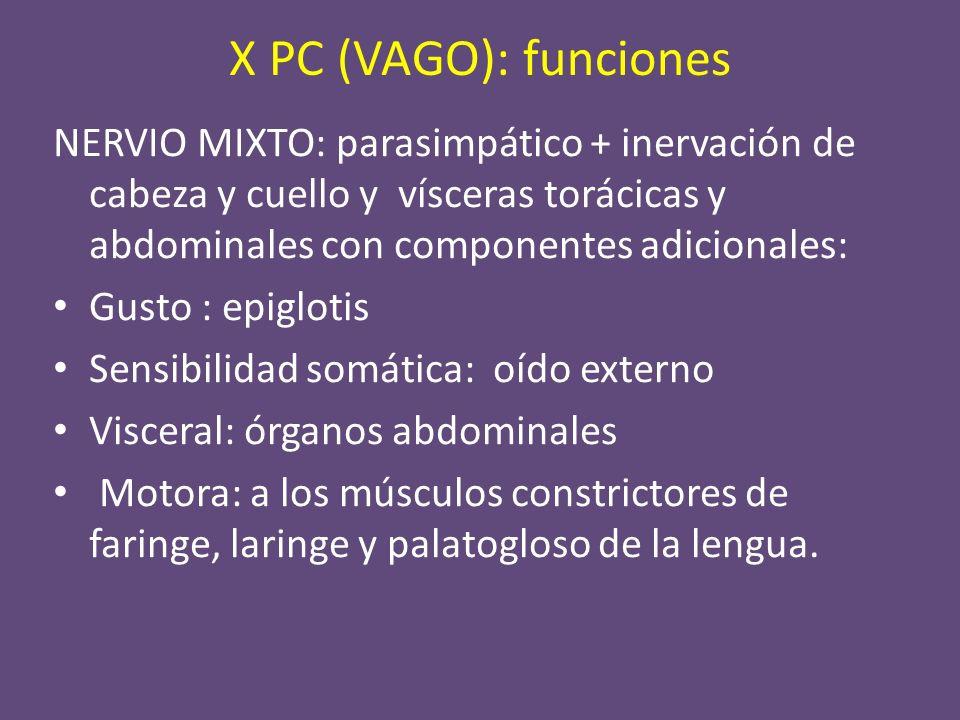 X PC: segmentos INTRAAXIAL.CISTERNAL. BASE DE CRÁNEO.
