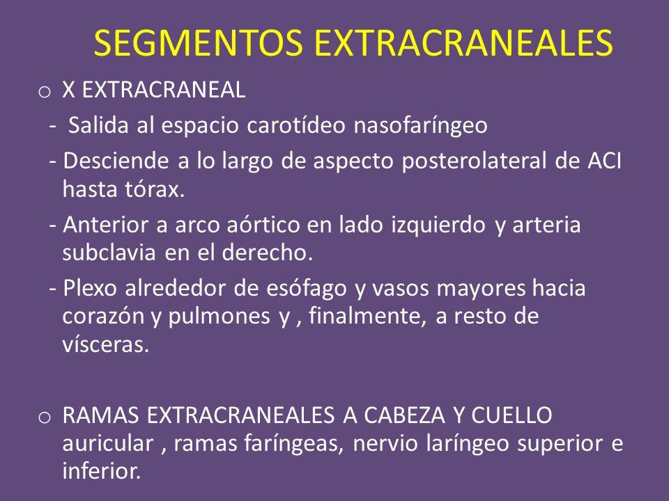 SEGMENTOS EXTRACRANEALES o X EXTRACRANEAL - Salida al espacio carotídeo nasofaríngeo - Desciende a lo largo de aspecto posterolateral de ACI hasta tórax.