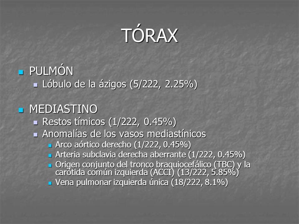 TÓRAX PULMÓN PULMÓN Lóbulo de la ázigos (5/222, 2.25%) Lóbulo de la ázigos (5/222, 2.25%) MEDIASTINO MEDIASTINO Restos tímicos (1/222, 0.45%) Restos t