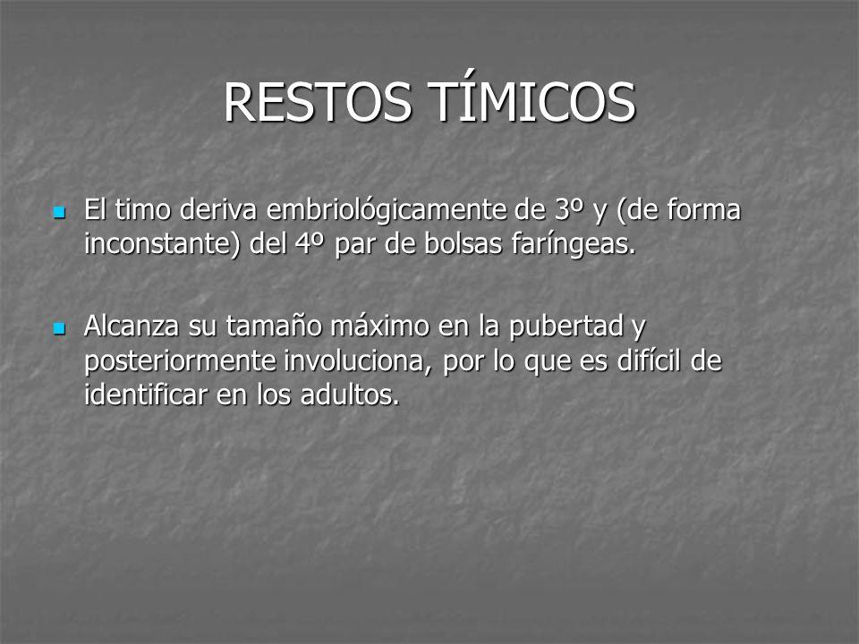 RESTOS TÍMICOS El timo deriva embriológicamente de 3º y (de forma inconstante) del 4º par de bolsas faríngeas. El timo deriva embriológicamente de 3º