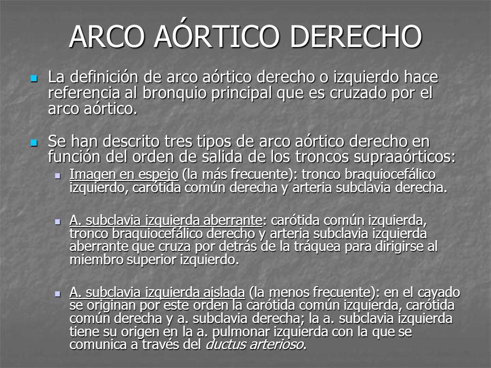 ARCO AÓRTICO DERECHO La definición de arco aórtico derecho o izquierdo hace referencia al bronquio principal que es cruzado por el arco aórtico. La de