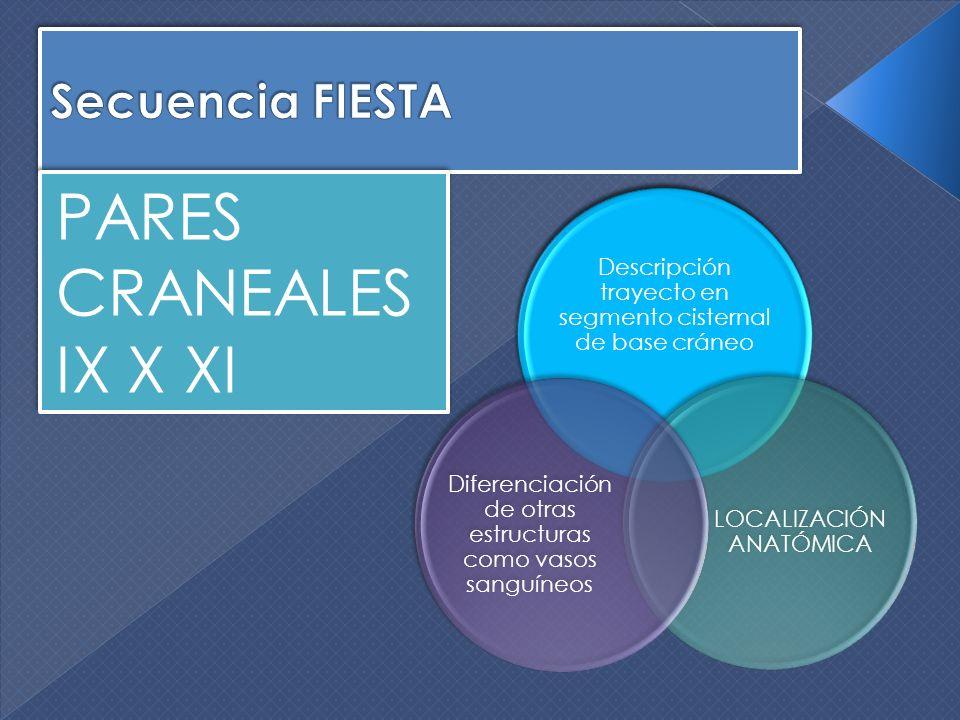 PARES CRANEALES IX X XI Descripción trayecto en segmento cisternal de base cráneo LOCALIZACIÓN ANATÓMICA Diferenciación de otras estructuras como vaso