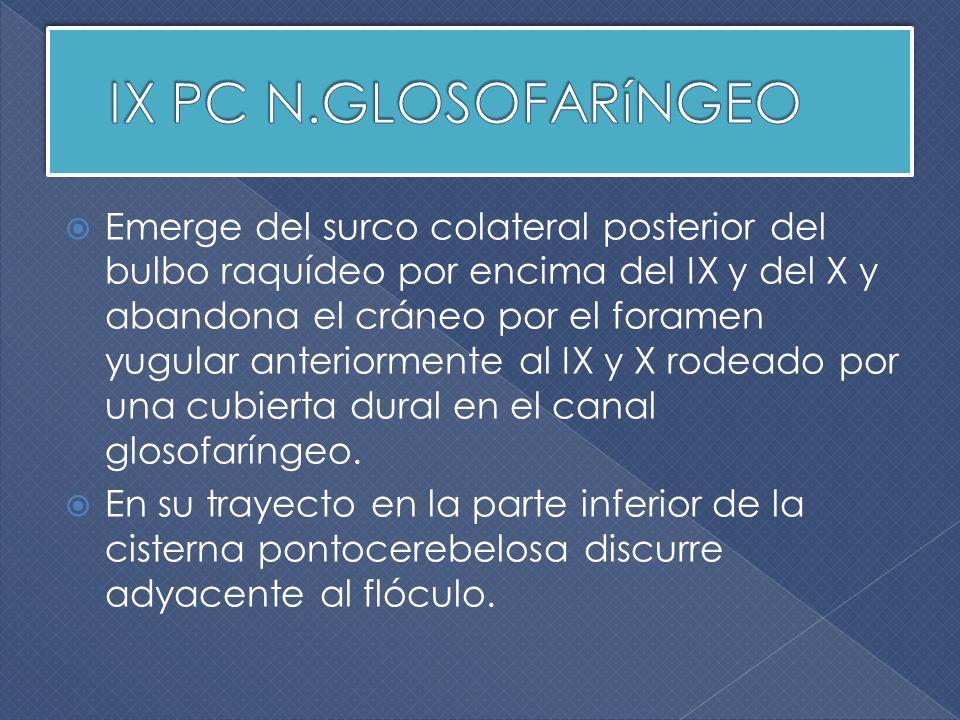 Incidencia parasagital oblicua.Se objetiva trayecto cisternal de PC VII, VIII, IX y X.