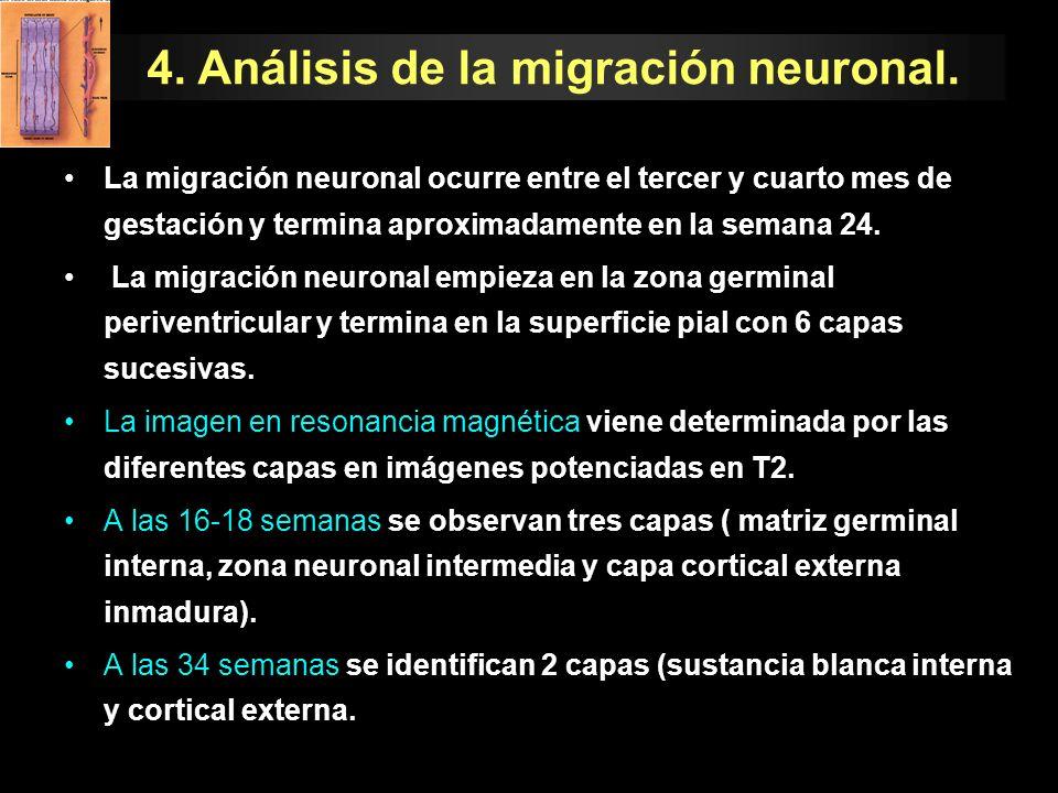 La migración neuronal ocurre entre el tercer y cuarto mes de gestación y termina aproximadamente en la semana 24. La migración neuronal empieza en la