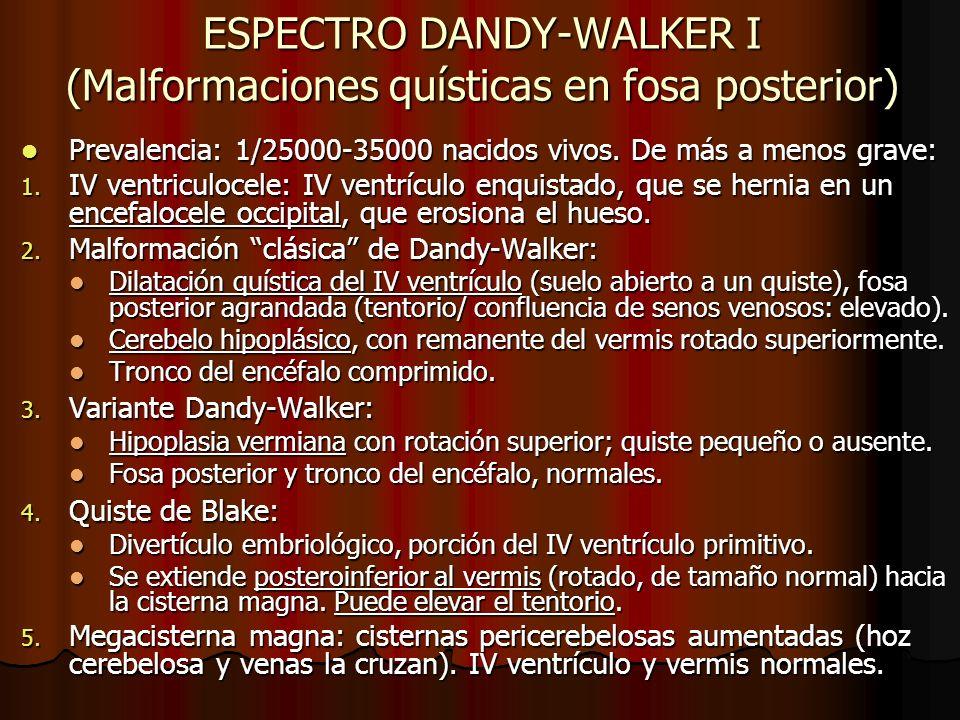 ESPECTRO DANDY-WALKER I (Malformaciones quísticas en fosa posterior) Prevalencia: 1/25000-35000 nacidos vivos. De más a menos grave: Prevalencia: 1/25